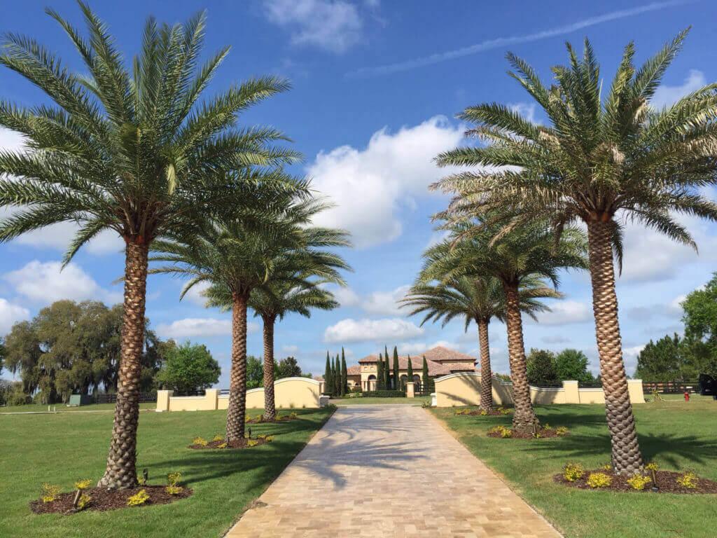 estate in the tropics